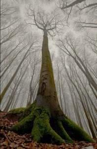 Deze afbeelding heeft een leeg alt-attribuut; de bestandsnaam is boom5.jpg